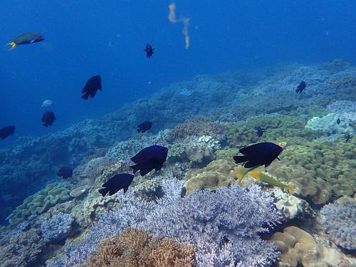 【沖縄本島】初めてでも、泳げなくても安心&おすすめのシュノーケルツアー♪