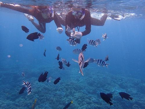 沖縄本島 体験ダイビング シュノーケル ツアー 初めて 泳げない