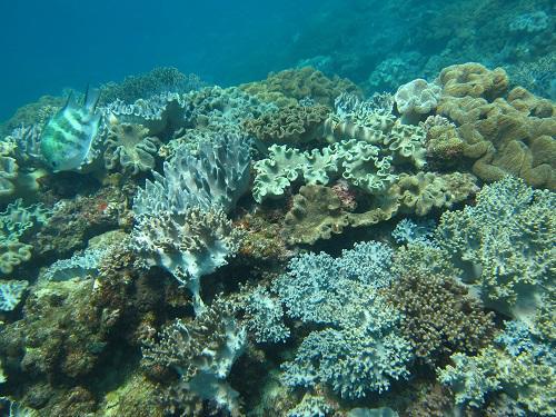 沖縄サンゴ礁.JPG