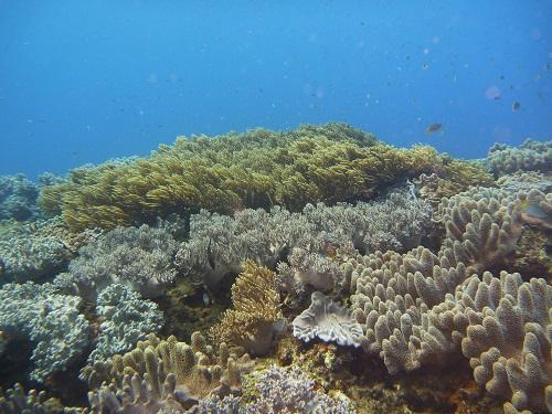 蒸し暑い夜は、サンゴの産卵?