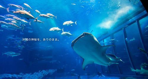 沖縄美ら海水族館@シーパーク北谷