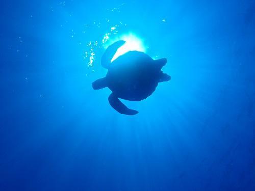 ウミガメ.JPG