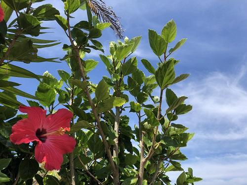 カーチベー吹く沖縄、明日は慰霊の日