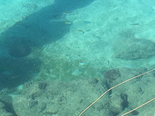 魚が見えるウォータパーク北谷.JPG