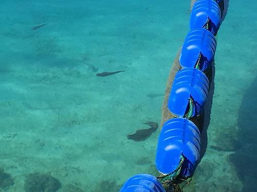 沖縄の魚.JPG