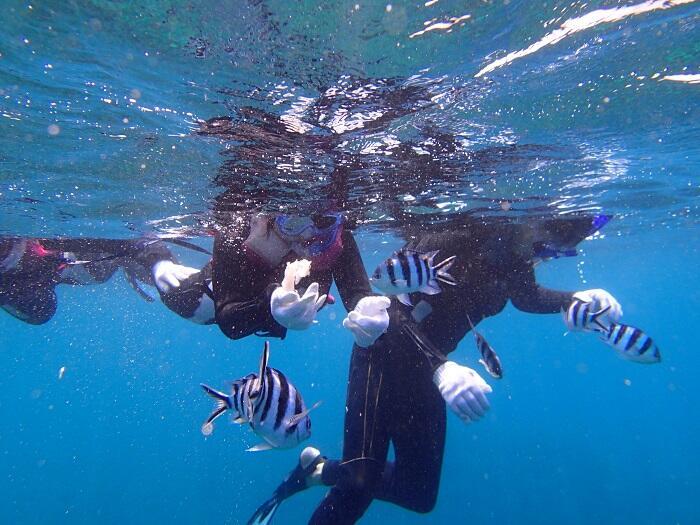 沖縄 シュノーケル 初めて 泳げない