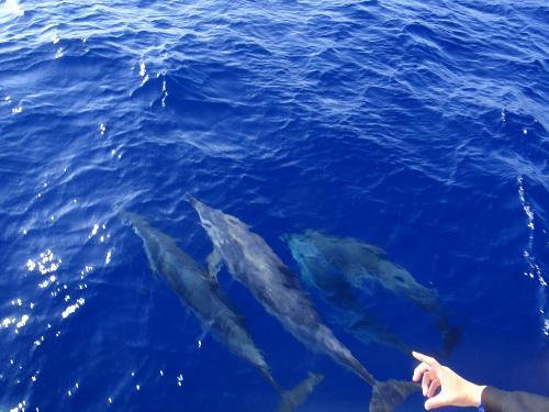 クジラもイルカもウォッチング