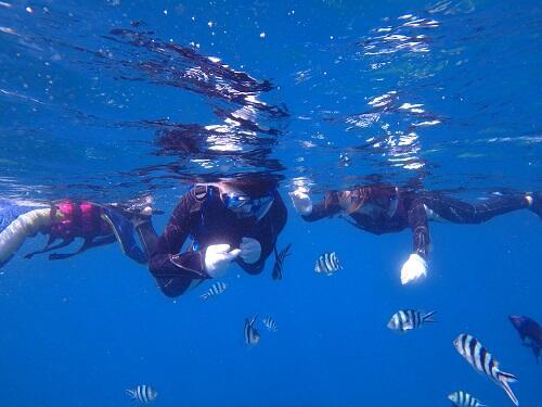 本日もご案内!沖縄『シュノーケル体験』5歳から参加できる!沖縄のサンゴをみに行こう!