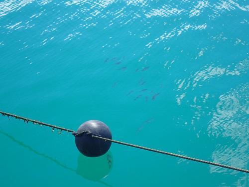 沖縄、北谷、海の劇場、魚の攻防、イカ、サヨリ、フィッシャリーナ、ボートチャーター、釣り、ダイビング.JPG