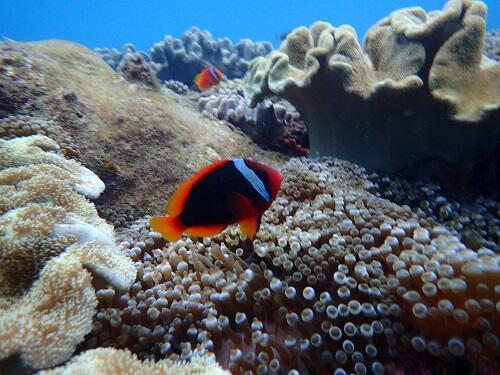 沖縄観光にサンゴ広がる海で『シュノーケル体験』がおすすめ!初めての方も、子供も楽しめる!@シーパーク北谷