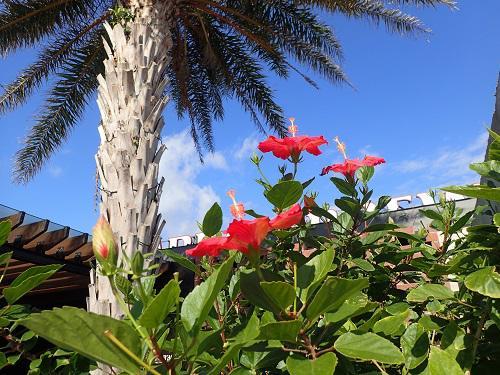 AMUROJETで沖縄旅行はいかが
