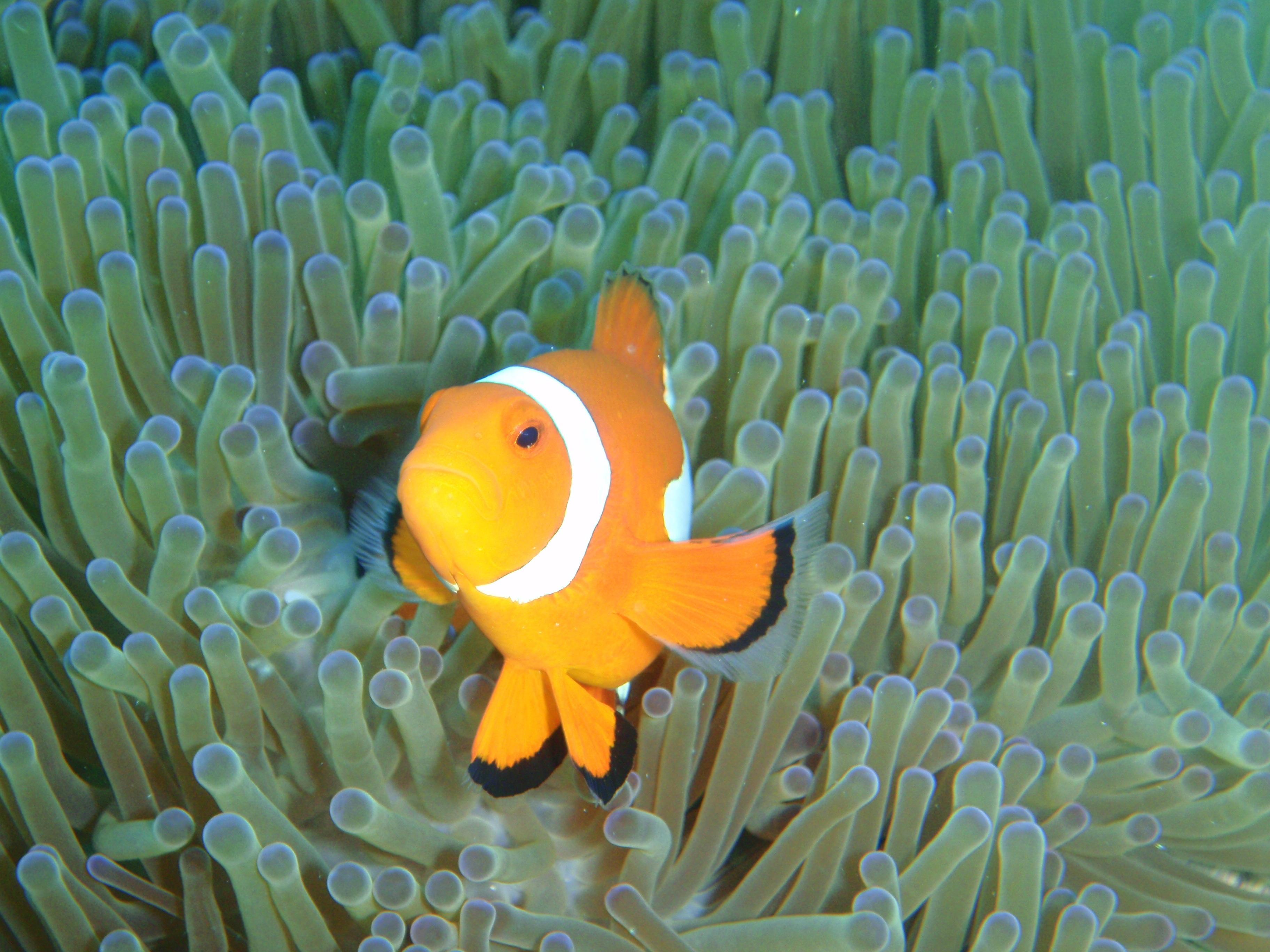 水中生物観察・浮遊感など楽しみ方は人それぞれ。自分好みのダイビングスタイルが徐々にできてきます