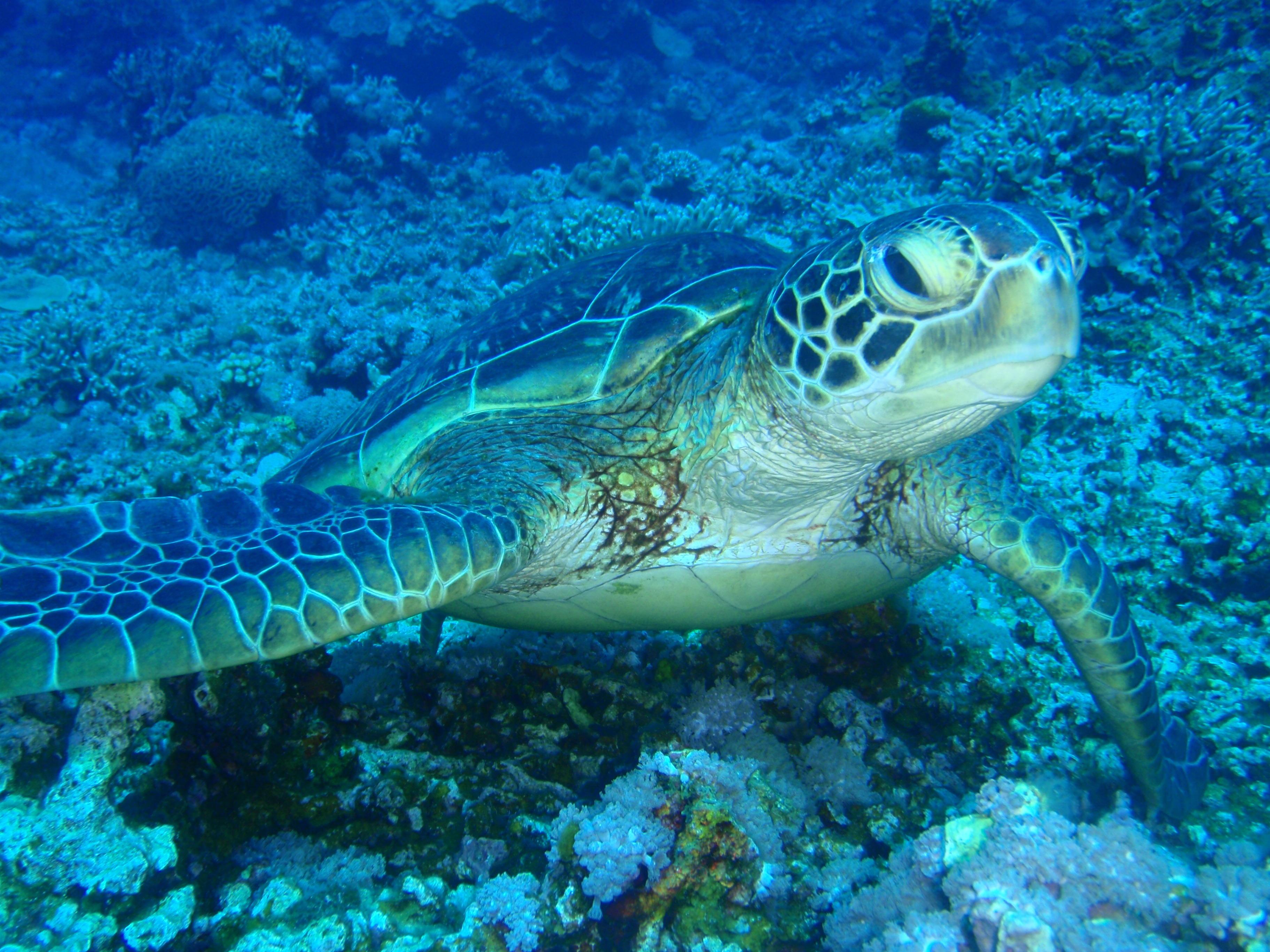ボートでの講習希望(別途)を出せば講習中にウミガメに出会うことも?!
