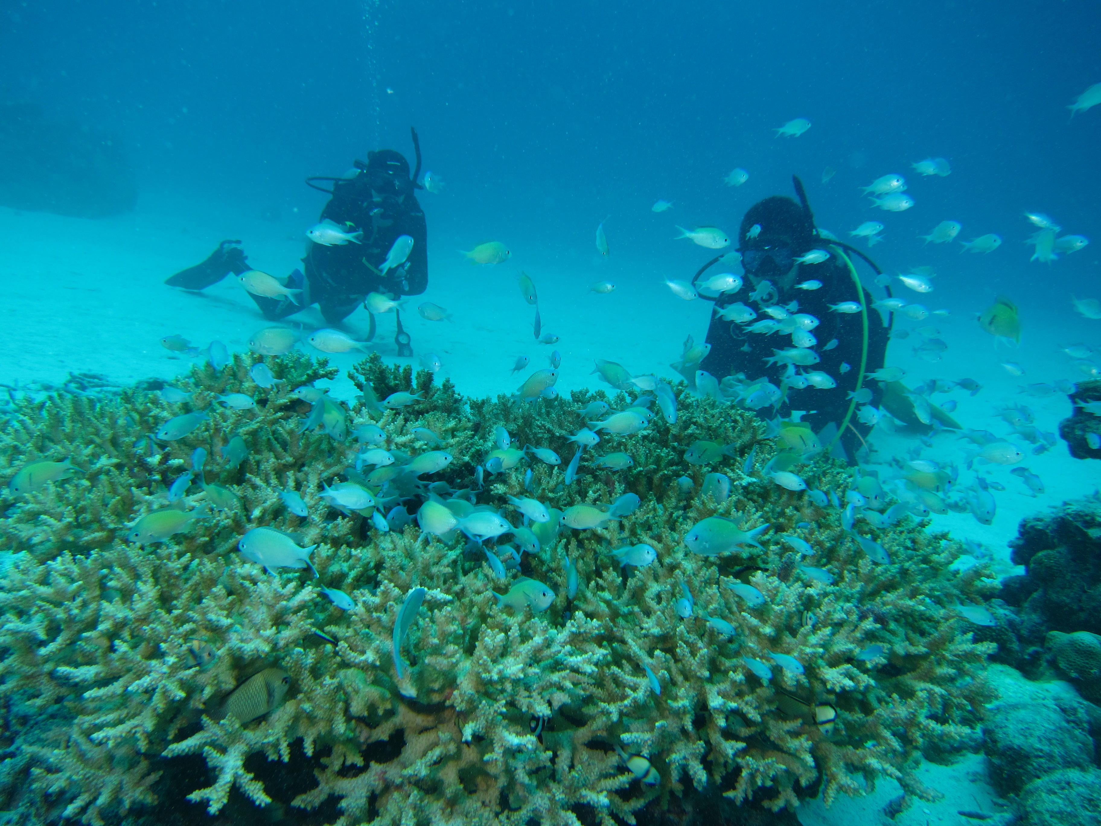 沖縄の海を熟知したベテランインストラクターがライセンス講習を担当します