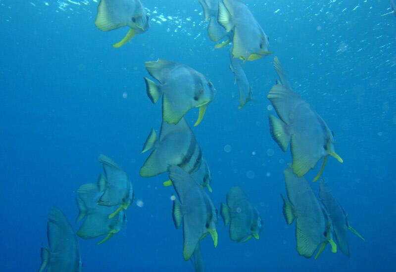 魚の大群だって見れちゃいます!