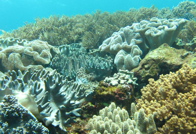 カラフルな魚、サンゴ礁をたっぷりお楽しみください。
