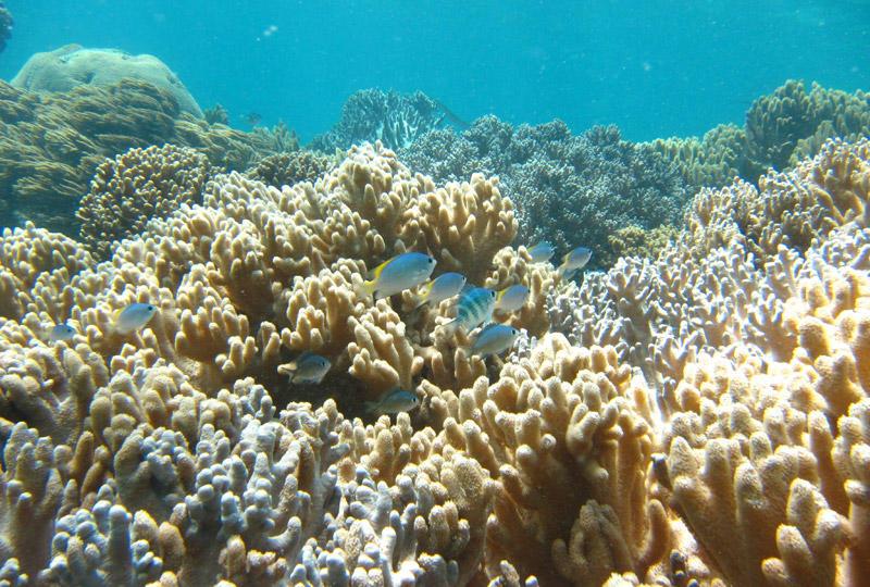 カラフルな魚、綺麗なサンゴ礁をたっぷり楽しめます